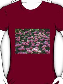 Parade of Pinks - Tulips in the Keukenhof Gardens T-Shirt