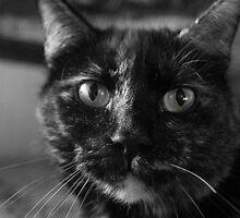Green eyed cat by rhigosrebel