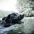 Swimming with my furry friend by Karen Havenaar