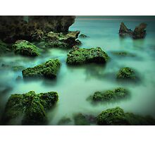 seaweed Photographic Print