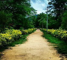 empty road in the nature by Bharath5160