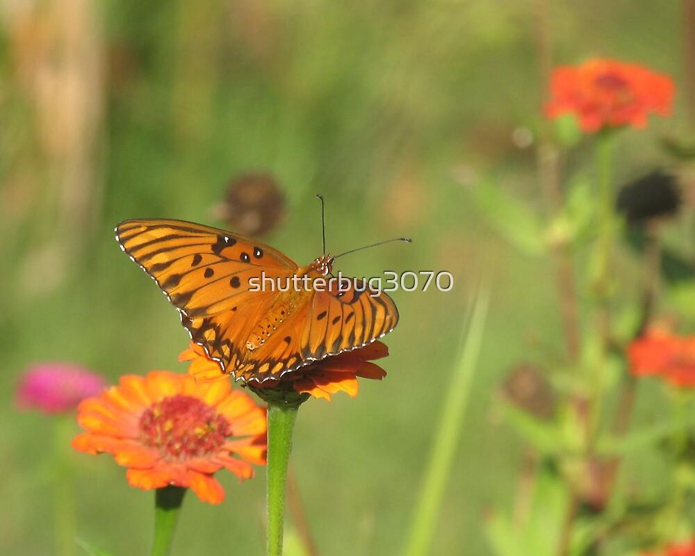 Petal Jumper by shutterbug3070