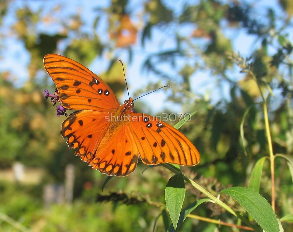 Butterfly Wishes 2 by shutterbug3070