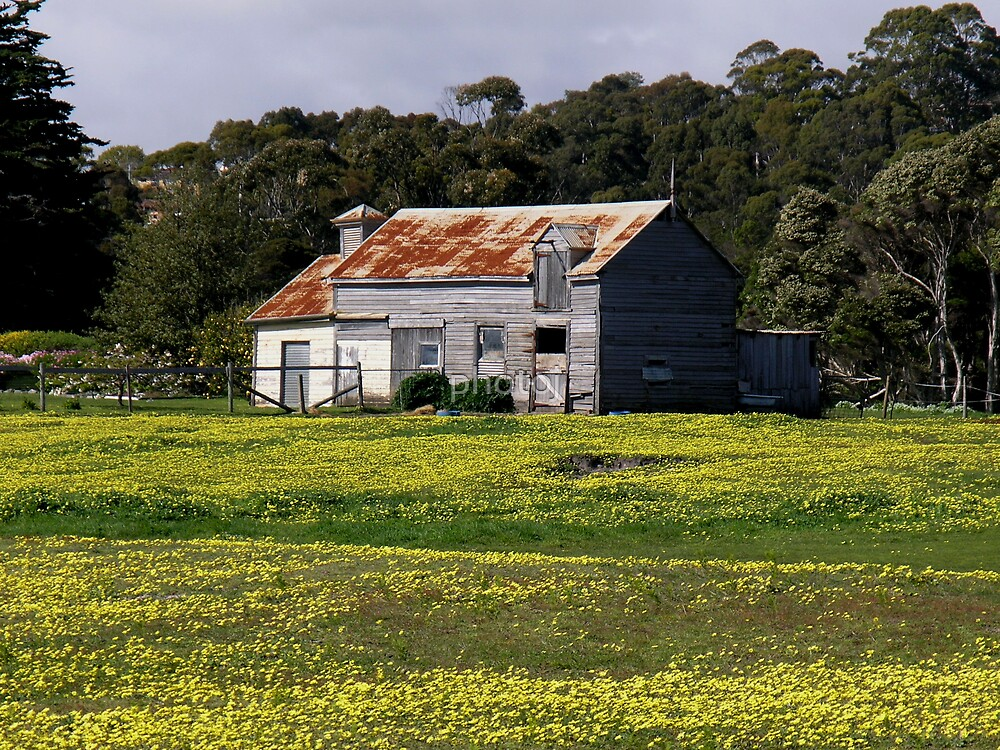 photoj-Tassie, Yellow Field, country Homestead by photoj