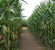 Corn maze by michael griffith