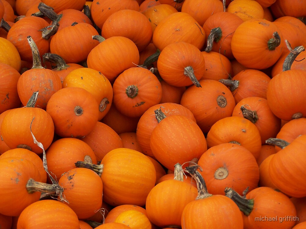 Baby pumpkins by michael griffith
