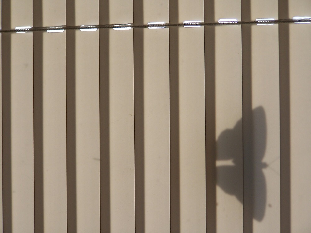 Butterfly in Silhouette by whircat