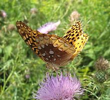 butterfly by mrskritter