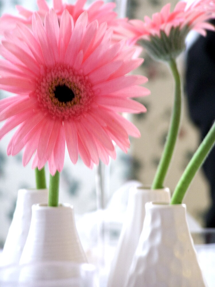 Pink Daisies by whircat
