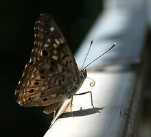 Butterfly on a Rail by whircat