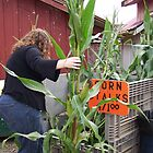 Corn stalks 4 sale by michael griffith