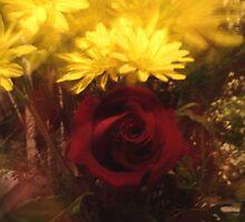 Zoomed Rose by Crokuslabel
