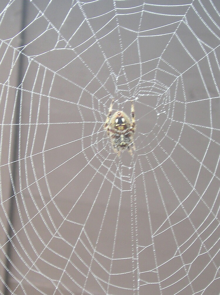 Ginny's Nightgown Spider, Fayetteville by adrianmole