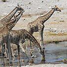 Thirsty Giraffes - Namebia by Gilberte