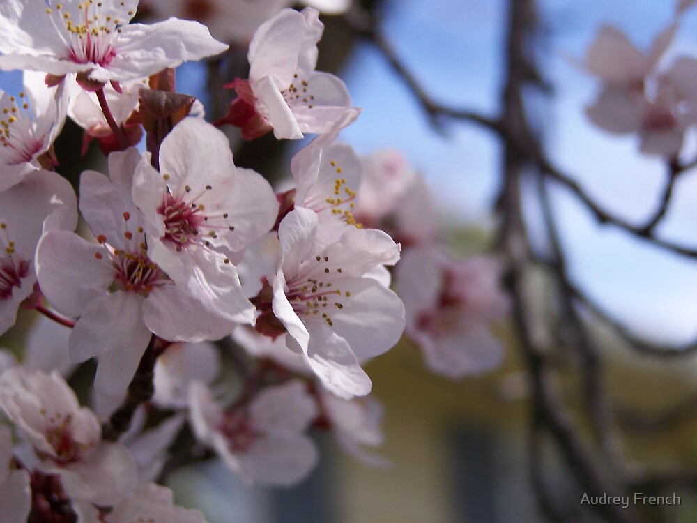 You Have to Love Spring! by Audrey French