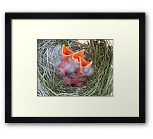 Baby Robins Framed Print