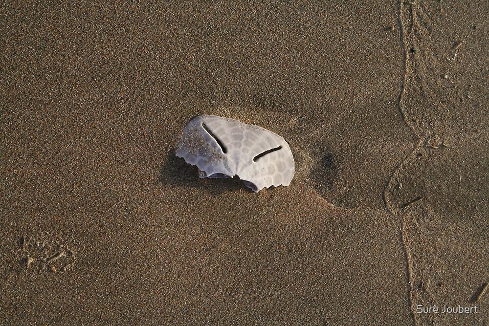 Half a Pansy by Surè Joubert