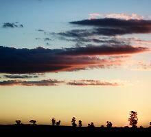 Sunset dreaming by David Haviland