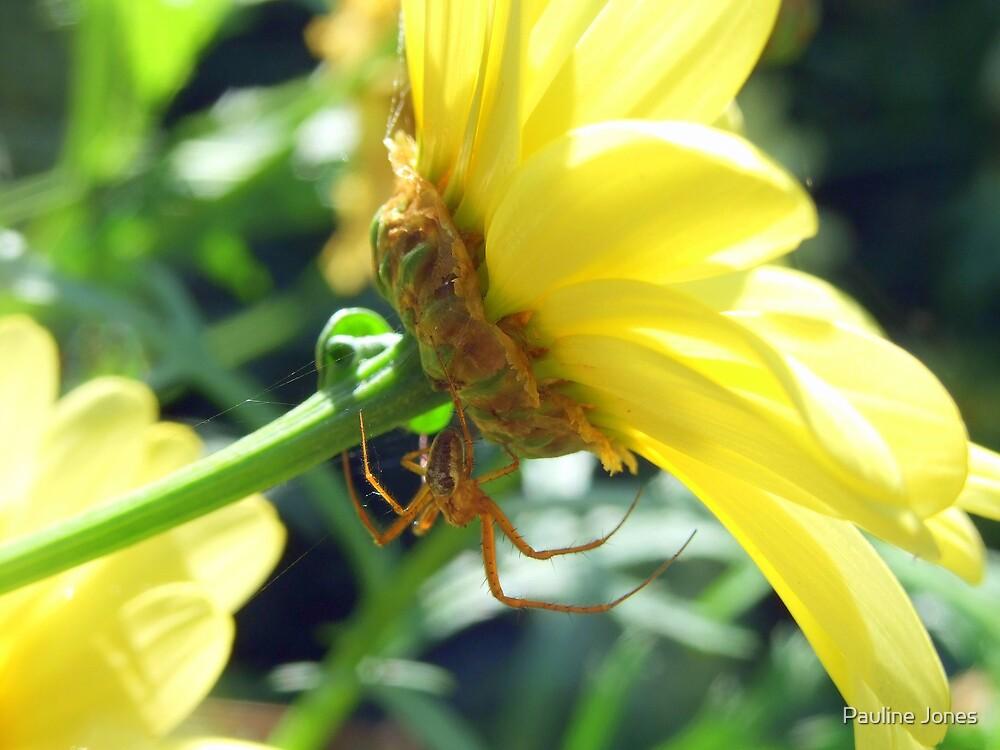 Incy Wincy Spider by Pauline Jones