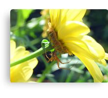 Incy Wincy Spider Canvas Print