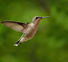 Ruby-Throated Hummingbird by Leisa  Hennessy