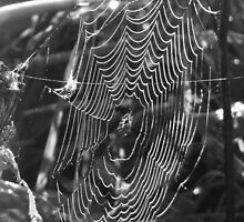 Web on a Dewy Day by Pauline Jones