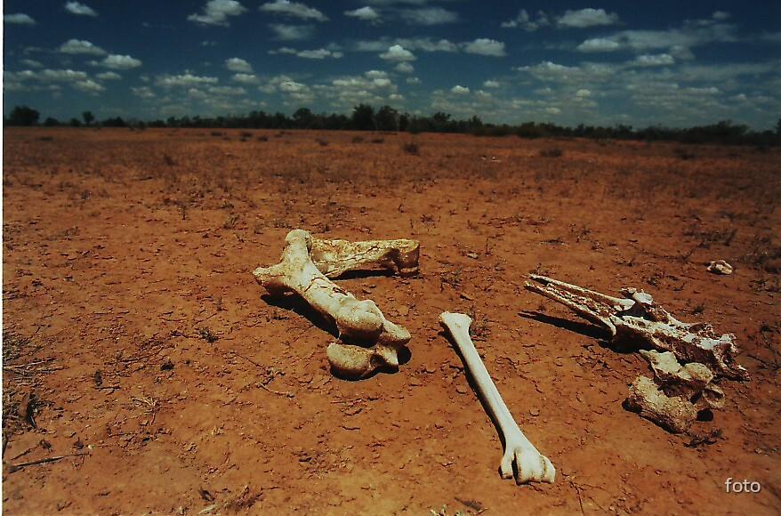 Kangaroo Bones by foto