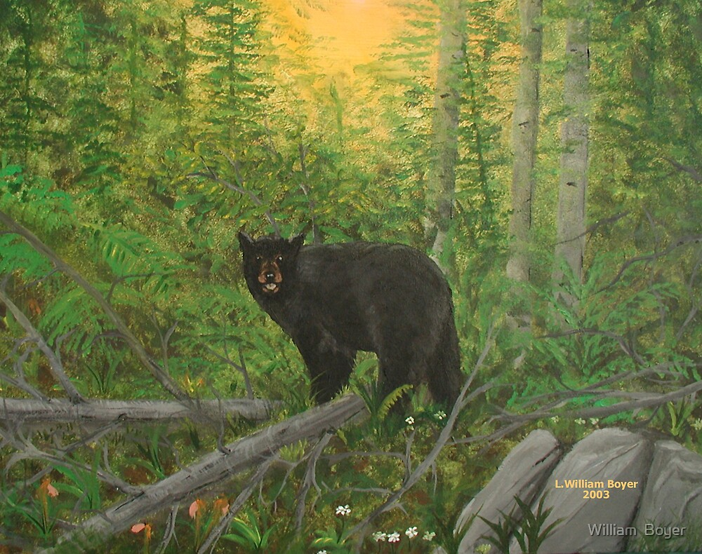 Bear in the Woods by William  Boyer
