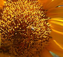 And it was all Yellow by Helly