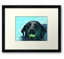 Buddy's Ball Framed Print