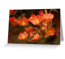 Orange Globe Mallow Greeting Card