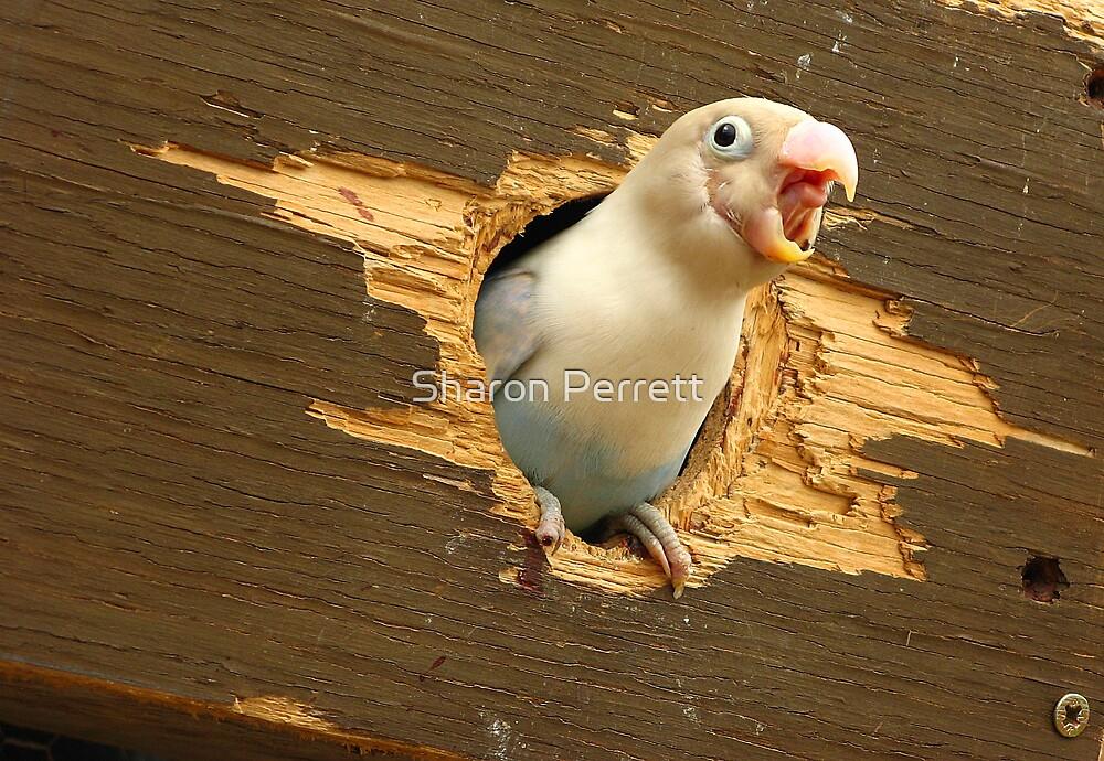 Beaky by Sharon Perrett