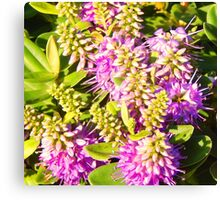 Wild Flowers of the Coast Canvas Print