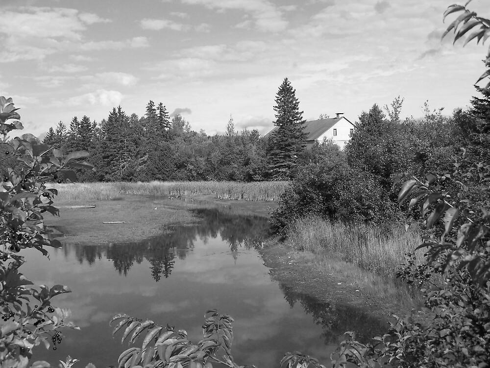Pond In Black & White by Gene Cyr