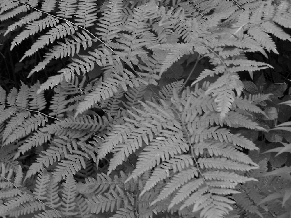 Fiddlehead Ferns by Gene Cyr