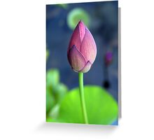 Momo Botan in bud Greeting Card