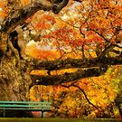 Colorful Old Oak Tree by LudaNayvelt