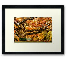 Colorful Old Oak Tree Framed Print
