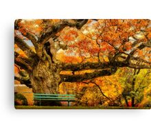 Colorful Old Oak Tree Canvas Print