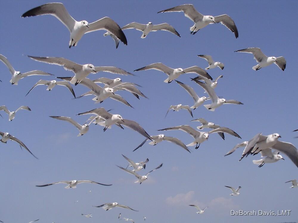 Wings over Galveston by DeBorah Davis, LMT
