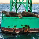 Oh Buoy! Seals!  by Heather Friedman