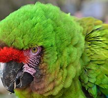 Green Parrot by Gary Kenyon