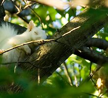 A Sleepy Albino Squirrel by Russell Fry