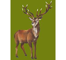Grand Stag Photographic Print