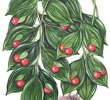 Miraculous Berry - Ruscus hypoglossum by Sue Abonyi