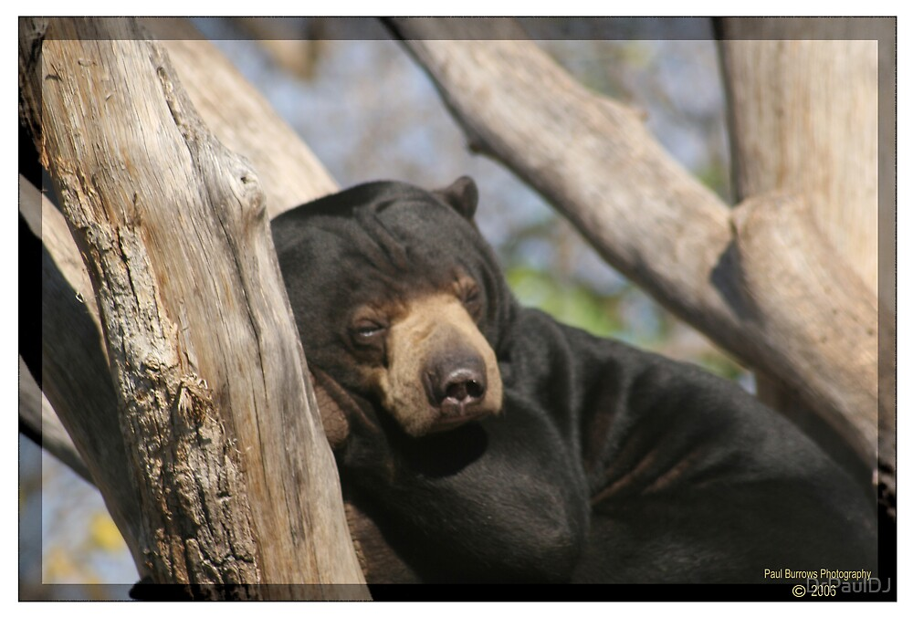 Sleeping Bear by DrPaulDJ