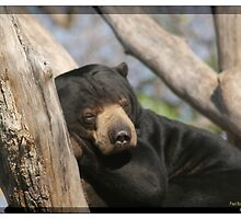 Sleeping Bear by DrPaulDJ