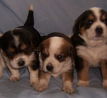 puppys  by Rebekah