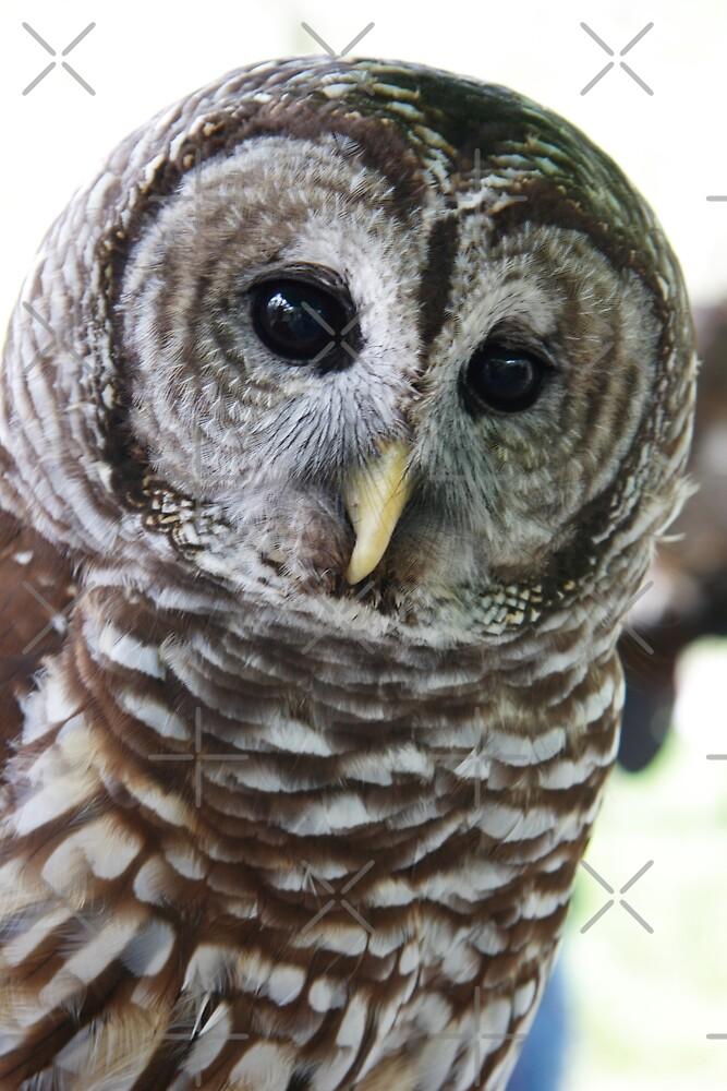 OWL by ImagineByLisa