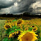 August Rains by signore